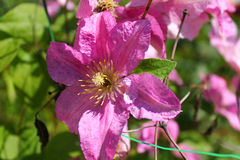 桃红色花 植物,自然 活照片 在一个绿色背景 叶子 兰花 免版税图库摄影