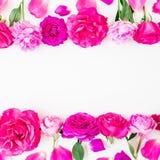 桃红色花-玫瑰、牡丹和叶子框架在白色背景 所有所有构成要素花卉例证各自的对象称范围纹理导航 平的位置,顶视图 免版税库存照片