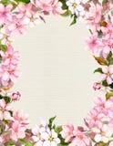 桃红色花-苹果,樱花 减速火箭的明信片的花卉葡萄酒框架 在纸背景的水彩画 免版税库存照片