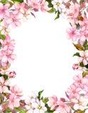 桃红色花-苹果,樱花 破旧的背景的花卉边界 水彩 向量例证