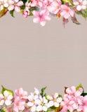 桃红色花-苹果,樱花 背景的花卉框架 水彩 库存图片