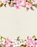 桃红色花-苹果,樱花 花卉框架构成系列 在纸的水彩 免版税库存图片