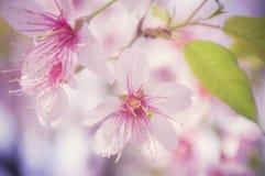 桃红色花3 库存图片