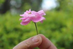 桃红色花 库存照片