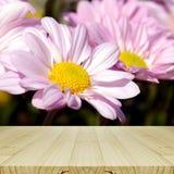桃红色菊花和木头表 库存图片