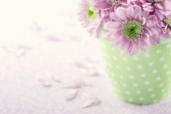 桃红色菊花flowers2 免版税图库摄影