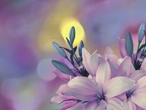 桃红色蓝色百合在与圆黄色的明亮的被弄脏的背景开花,蓝色,紫色聚焦 特写镜头 明亮的花卉co 库存照片
