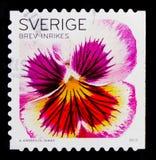 桃红色蝴蝶花,植物群开花-一般serie,大约2010年 免版税库存图片