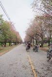 桃红色街道 库存图片