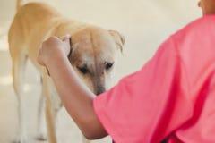 桃红色衬衣的招呼的十几岁的女孩她的棕色狗,当她retur 免版税库存照片