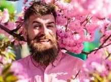桃红色衬衣的行家在佐仓附近分支  与自然概念的和谐 有时髦的理发的有胡子的人与佐仓 库存图片