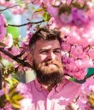 桃红色衬衣的行家在佐仓附近分支  有胡子的在微笑的面孔的人和髭在花附近 有胡子的人与 库存图片