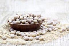 桃红色豆 免版税库存图片