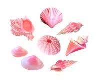 桃红色贝壳 也corel凹道例证向量 在海运之下 水下的紫色生活 桃红色野孩子 软体动物 使用木炭羽毛画笔(膨胀)作为分级显示, - 皇族释放例证
