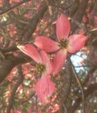 桃红色起点 库存图片