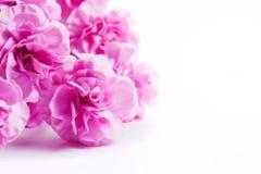 桃红色软的春天开花在白色背景的花束 免版税库存照片