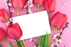 桃红色郁金香和春天花束在桃红色背景开花 库存图片