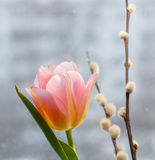 桃红色郁金香和褪色柳在被弄脏的都市背景分支 库存图片
