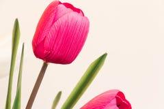 桃红色郁金香在与绿叶的copys的花束和室开花 免版税库存照片