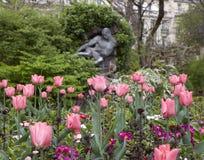 桃红色郁金香在巴黎公园  免版税库存照片