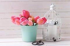 桃红色郁金香在薄荷的颜色桶和装饰灯笼开花 免版税库存照片
