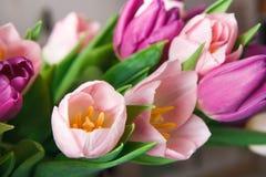 桃红色郁金香宏观特写镜头背景,拷贝空间 库存图片