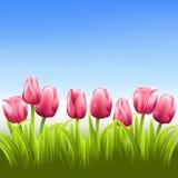 桃红色郁金香有蓝天传染媒介背景 向量例证