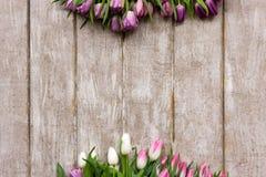 桃红色郁金香框架  背景蒲公英充分的草甸春天黄色 免版税库存照片