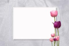 桃红色郁金香框架 库存照片