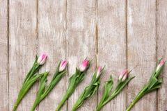 桃红色郁金香的装饰品在木背景的 图库摄影