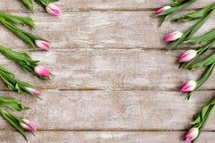 桃红色郁金香的装饰品 背景蒲公英充分的草甸春天黄色 免版税库存图片
