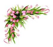 桃红色郁金香花和丝带壁角安排 免版税库存图片