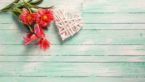 桃红色郁金香花和装饰心脏在绿松石绘了w 库存照片