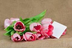 桃红色郁金香花束与缎丝带和一点明信片的 库存图片