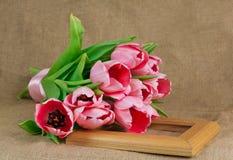 桃红色郁金香花束与说谎在框架的缎丝带的 免版税库存图片