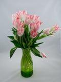 桃红色郁金香花束在白色背景的 库存照片