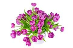 桃红色郁金香花束在白色隔绝的花盆的 免版税库存图片