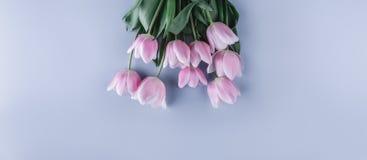 桃红色郁金香花束开花在浅兰的背景 贺卡或婚礼邀请 库存图片