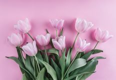 桃红色郁金香花束开花在浅粉红色的背景 贺卡或婚礼邀请 免版税库存照片
