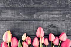桃红色郁金香行在土气木背景的与拷贝空间f 库存图片