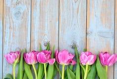 桃红色郁金香行在蓝灰色的打结了与空的空间布局的老木背景 库存照片