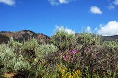 桃红色野花在Yellowtone 库存图片