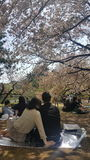 桃红色野餐 免版税图库摄影