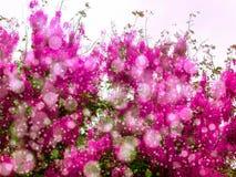 桃红色阵雨在秋天开花绽放所有树 库存照片