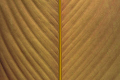 桃红色陆军少校的肩章纹理 免版税图库摄影