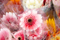 桃红色雏菊在花市场上 图库摄影