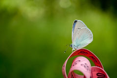 桃红色颜色一卷测量的磁带,对此一只蓝色蝴蝶一个接近的看法坐被弄脏的背景 免版税库存照片