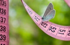 桃红色颜色一卷测量的磁带,对此一只蓝色蝴蝶一个接近的看法坐被弄脏的背景 库存照片