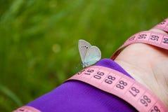 桃红色颜色,对此一只蓝色蝴蝶,接近的看法测量的磁带坐被弄脏的背景 免版税库存图片