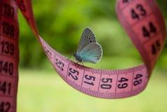 桃红色颜色,对此一只蓝色蝴蝶,接近的看法测量的磁带坐被弄脏的背景 库存图片